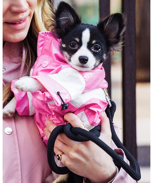 Dog Testimonials from Rent the Runway - Luey the Chihuahua